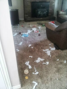 puppy messes