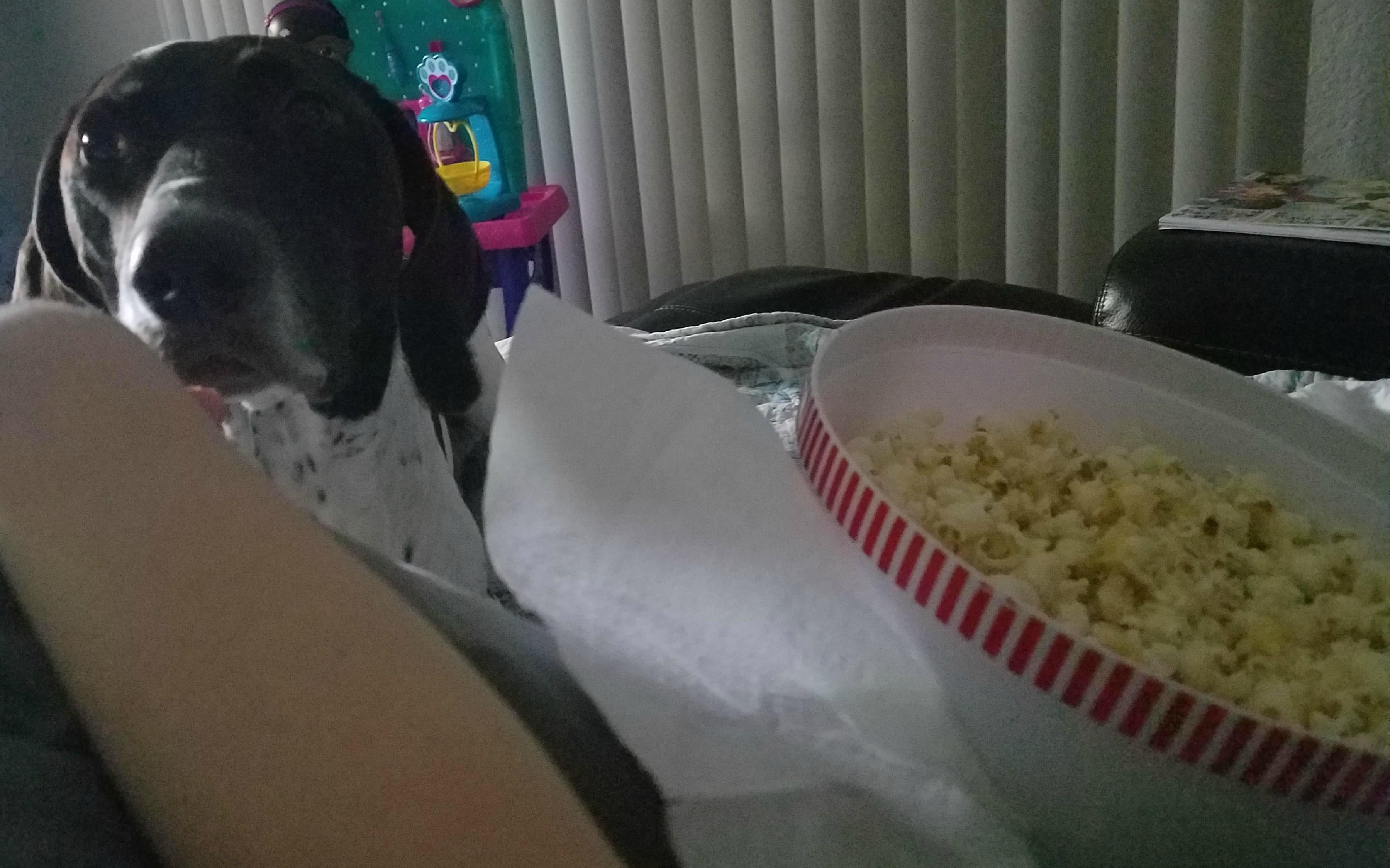 dog watches popcorn