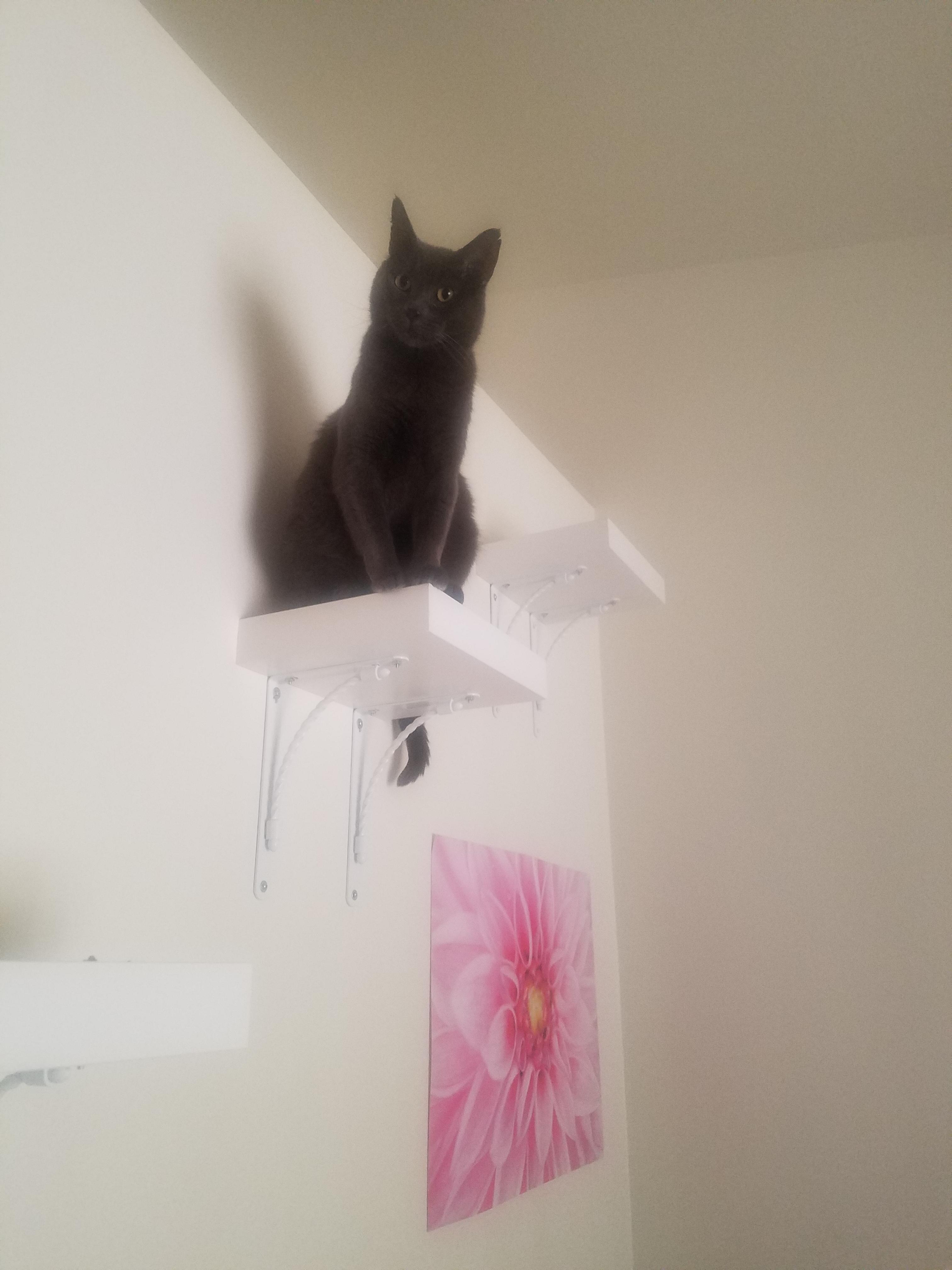 killer cat